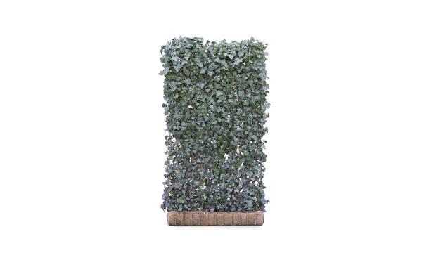• Gras en Groen Hagen