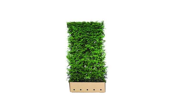 Quickhedge Taxus baccata 180 • Gras en Groen Hagen