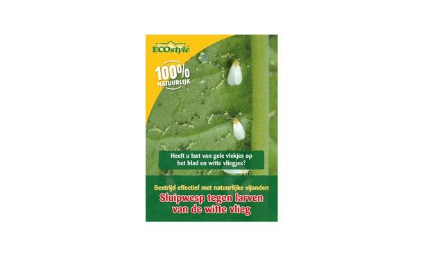 Sluipwesp larven van de witte vlieg 500 st. • Gras en Groen Winkel