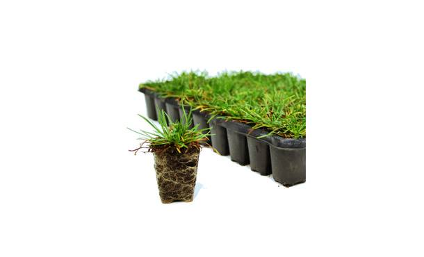 Graspluggen P5 72 st. • Gras en Groen Winkel