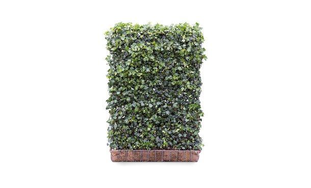 Hedera schutting Green Ripple - 180 cm - hardhout • Gras en Groen Schuttingen