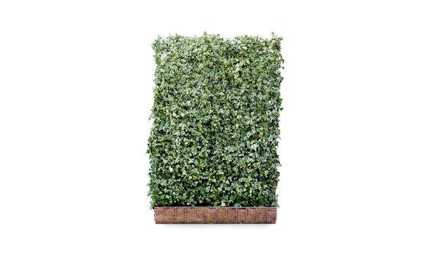 Hedera schutting 'White Ripple' - 180 cm - metaal • Gras en Groen Schuttingen