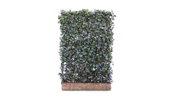Hedera schutting Woerner- 180 cm - hardhout • Gras en Groen Schuttingen