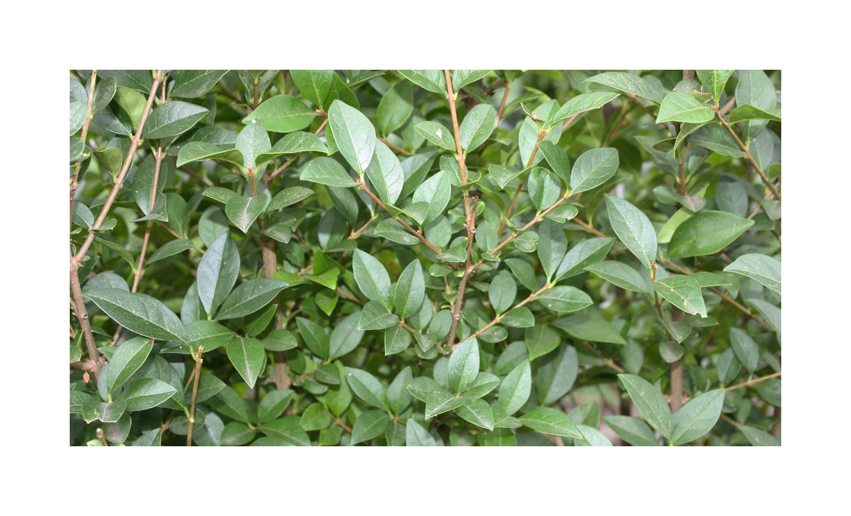 1 • Gras en Groen Winkel