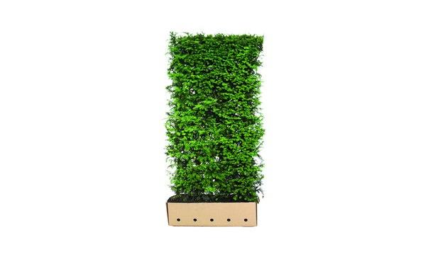 Quickhedge Taxus baccata • Gras en Groen Hagen