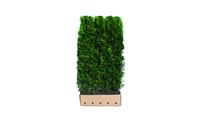 Quickhedge Thuja occidentalis 'Smaragd' • Gras en Groen Hagen