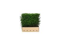 Quickhedge Taxus baccata 80 • Gras en Groen Hagen