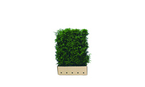 Quickhedge Taxus baccata 120 • Gras en Groen Hagen