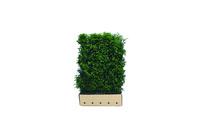 Quickhedge Taxus baccata 150 • Gras en Groen Hagen