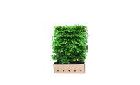 Quickhedge Fagus Sylvatica 120 • Gras en Groen Hagen