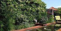 Klimhortensia - Hydrangea anomala petiolaris • Gras en Groen Hagen