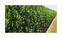 Quickhedge Thuja occidentalis 'Smaragd' 2 • Gras en Groen Hagen