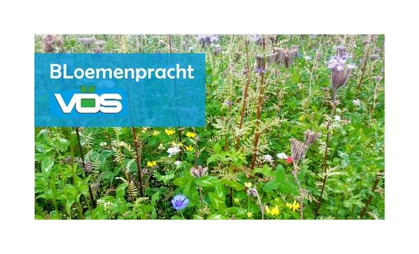 Bloemenpracht 1 kg • Gras en Groen Winkel